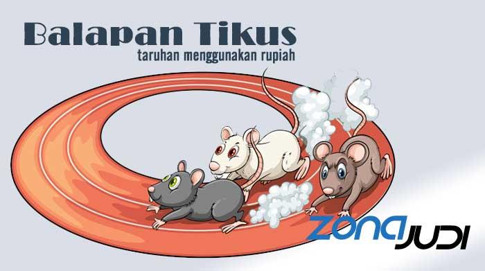 Taruhan Balapan Tikus, Permainan Judi Terbaru Menggunakan Uang